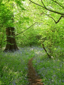 Ancient Woodland - HS2 Ltd can't see it for the trees.