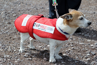 HS2 Small Dog