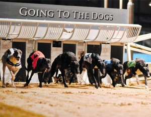 Picture of dog racing