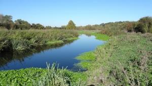 Frays River in Frays Farm Meadows