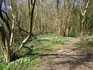 South Cubbington ancient woodland
