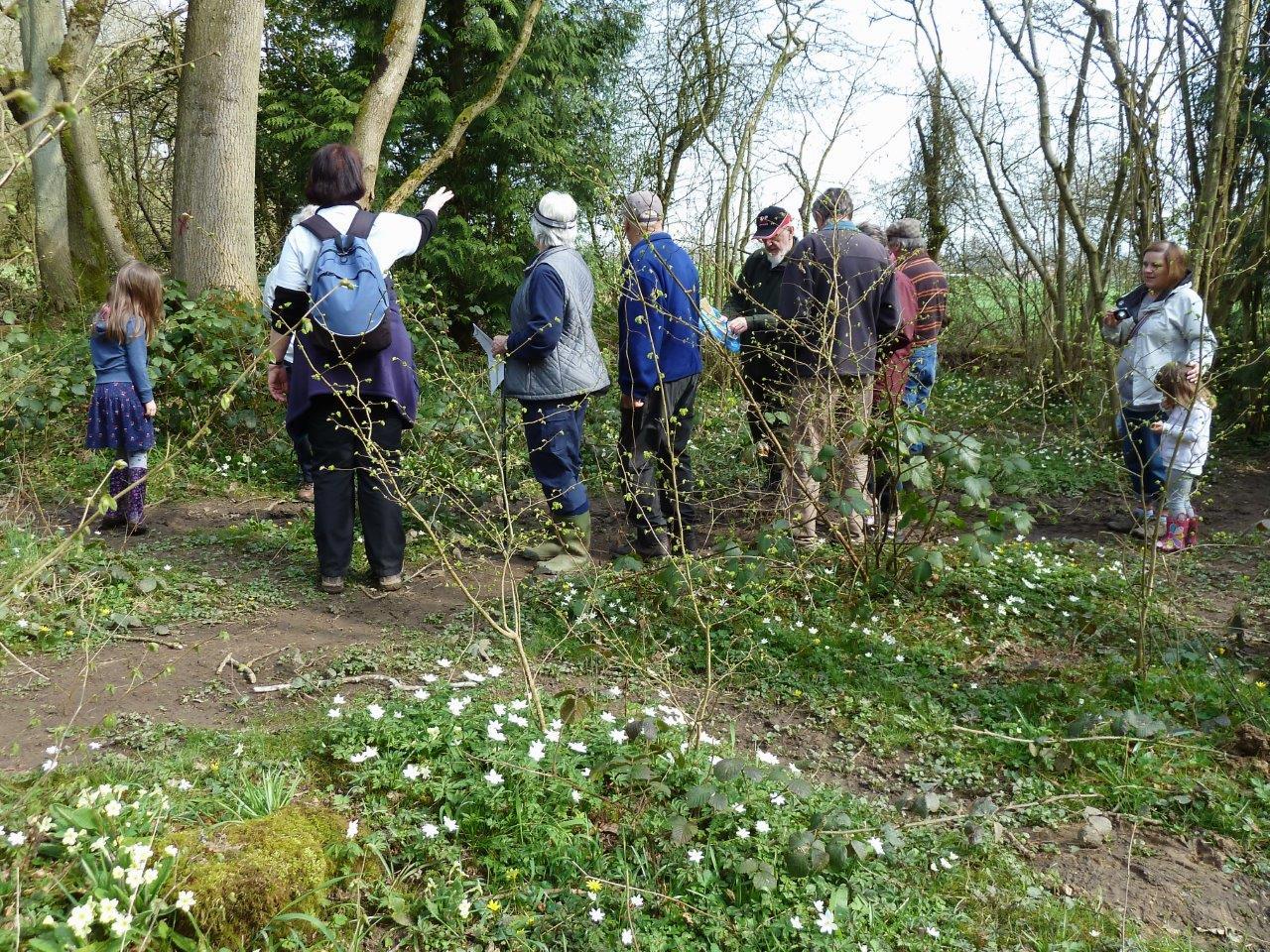 Cubbington Spring Flower Walk in April three years ago. FWilmot P1080162.jpg