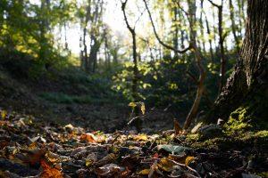 Ancient Woodland floor