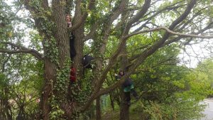 Campaigners in Trees at Harvill Road Protection Camp