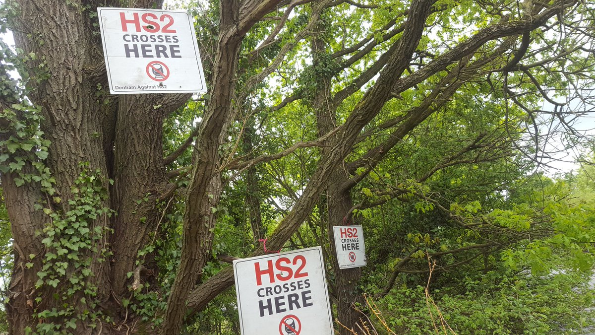 HS2 Crosses here signs in trees at Harvill Road