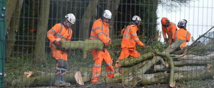Felling trees at Jones Hill Wood